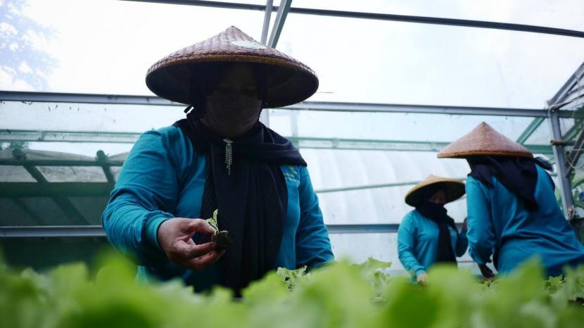 Kelompok Tani Wanita di Lembang, Jawa Barat ubah pekarangan menjadi sebuah ladang penghasilan.