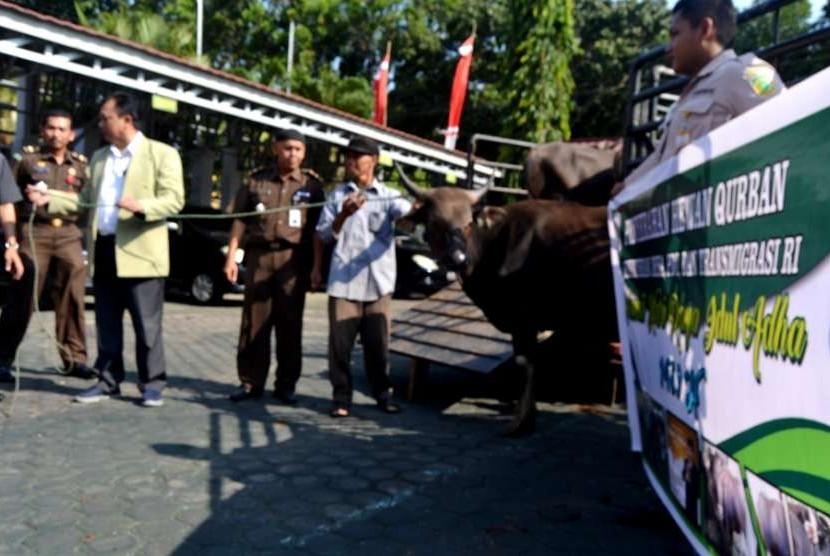 Kemendes PDTT menyerahkan tujuh ekor sapi kurban yang akan dipotong pada Hari Raya Idul Adha 1439 di Bengkulu.
