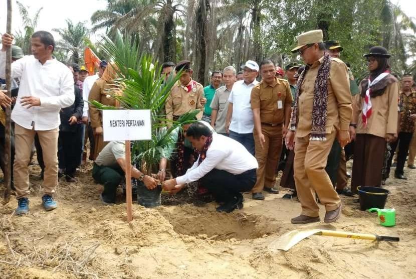 Kementerian Pertanian (Kementan) melakukan peremajaan kelapa sawit di Desa Ujung Tanjung Kecamatan Sungai Bahar, Kabupaten Muaro Jambi, Jambi pada Senin (10/9).