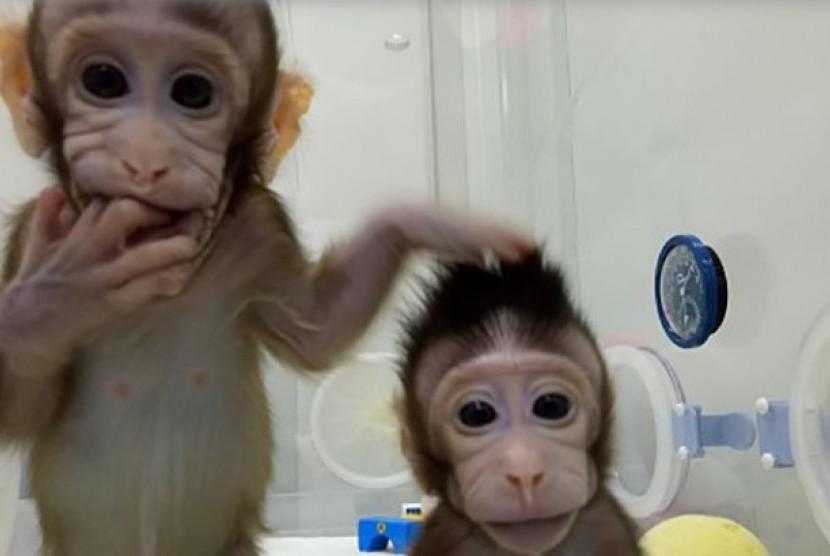 Dua Kera Kloning Dilahirkan: Ilmuwan Cina Dobrak Hambatan Kloning pada Primata