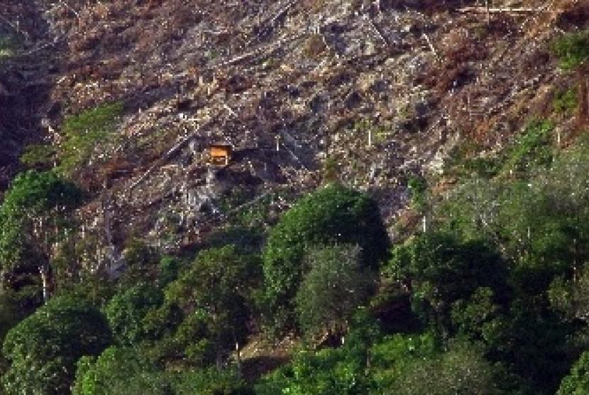 Kerusakan hutan (ilustrasi)