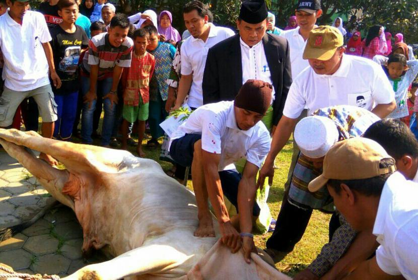 Pemotongan hewan qurban (ilustrasi)