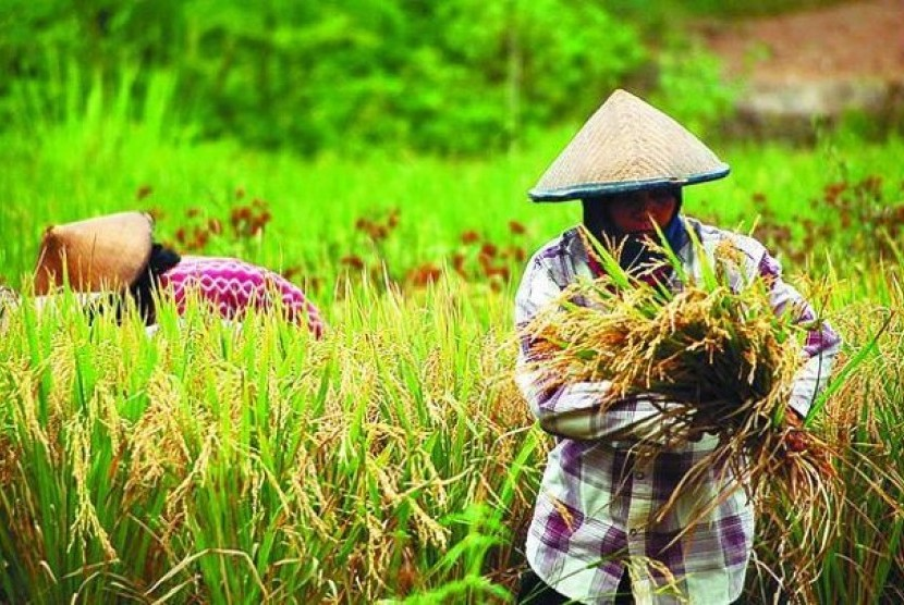 Kritis Jumlah Lahan Pertanian Di Indonesia Republika Online