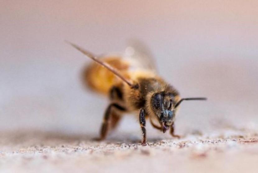 Lebah juga bisa memiliih jalur mana yang lebih cepat untuk dilalui.