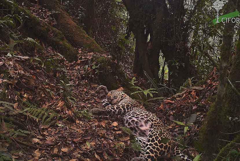 73 Gambar Babi Hutan Jawa Terbaik
