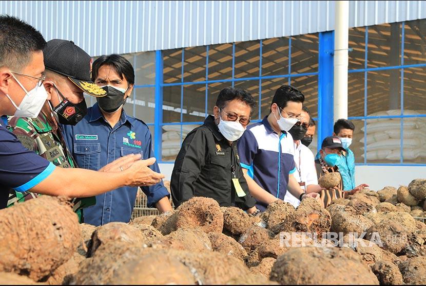 Mentan Syahrul Yasin Limpo mengunjungi PT Asia Prima Konjac, salah satu pabrik porang di Madiun, Jawa Timur, pada Jumat (30/7).