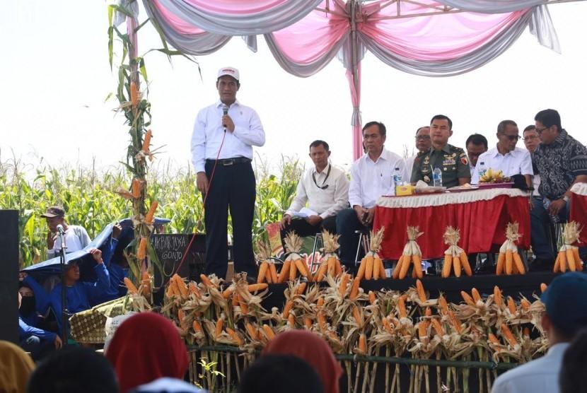 Menteri Pertanian Amran Sulaiman menghadiri panen raya jagung di Kabupaten Lamongan, tepatnya di Desa Mojorejo Kecamatan Modo Kabupaten Lamongan, Rabu (6/2).