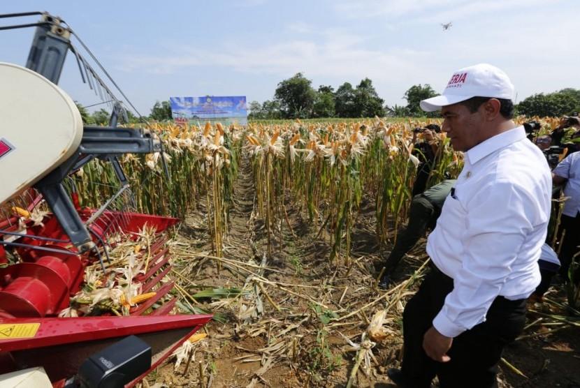 Menteri Pertanian Amran Sulaiman meninjau panen jagung.