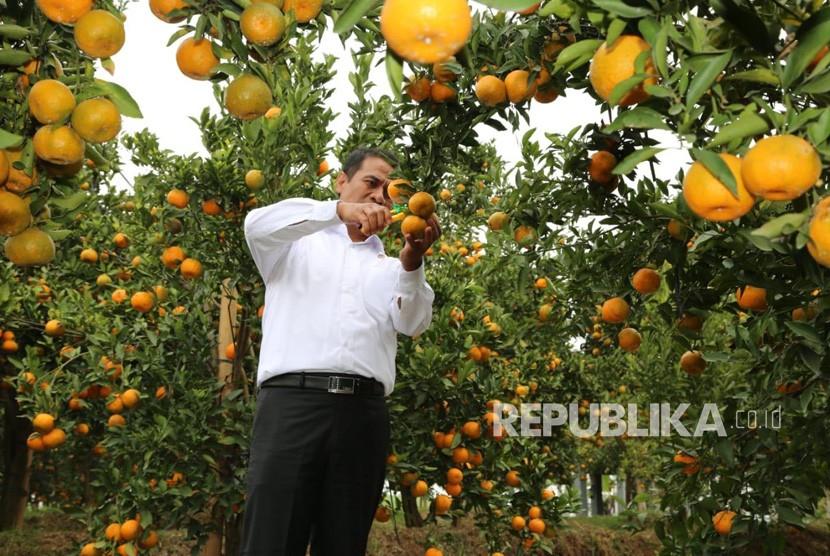 Menteri Pertanian Andi Amran Sulaiman memberi bantuan gratis satu juta benih jeruk keprok dan pupuk kepada masyarakat, Selasa (17/7).