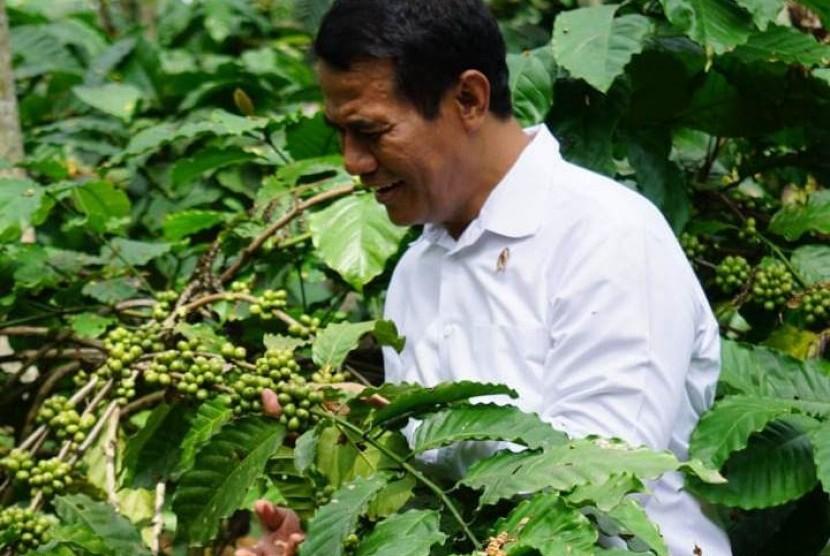Menteri Pertanian Andi Amran Sulaiman saat meninjau perkebunan kopi