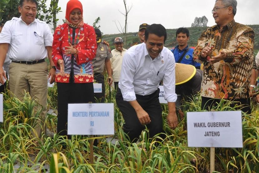 Menteri Pertanian Andi Amran Sulaiman (tengah) meninjau tanaman bawang putih di perladangan lereng gunung Sumbing Desa Petarangan, Kledung, Temanggung, Jawa Tengah, Rabu (12/4).