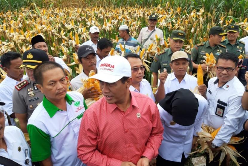 Menteri Pertanian (Mentan) Andi Amran Sulaiman melakukan panen jagung di Desa Randu Merak, Kecamatan Paiton, Kabupaten Probolinggo, Jawa Timur (Jatim), Rabu (16/1).