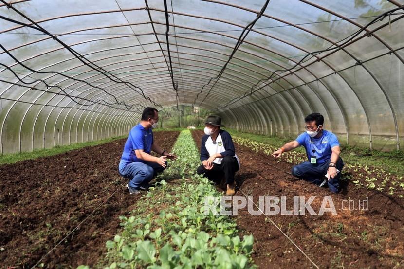 Banjarnegara Intensifkan Pengembangan Pertanian Modern (ilustrasi).