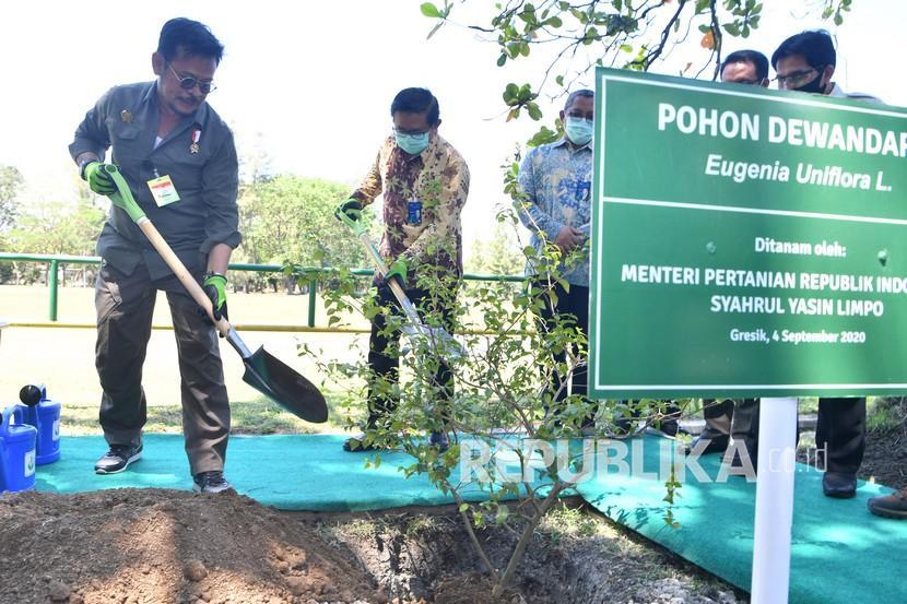 Menteri Pertanian Syahrul Yasin Limpo (kiri) dan Dirut Petrokimia Gresik Dwi Satriyo Annurogo (kedua kiri) menanam pohon Dewandaru di area Petrokimia Gresik, Jawa Timur, Jumat (4/9/2020). Kunjungan Syahrul Yasin Limpo tersebut dalam rangka meninjau ketersediaan pupuk bersubsidi yang akan disalurkan ke petani.