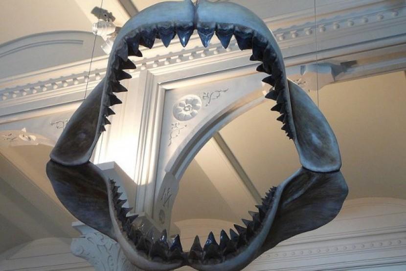 Model rahang spesies hiu purba C.megalodon di American Museum of Natural History.