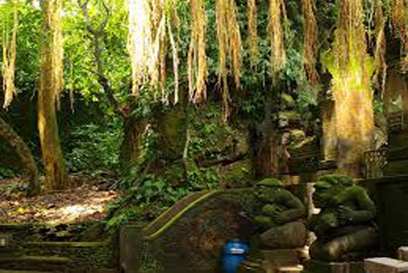 Objek Wisata Monkey Forest Raup Rp 225 Juta Per Hari
