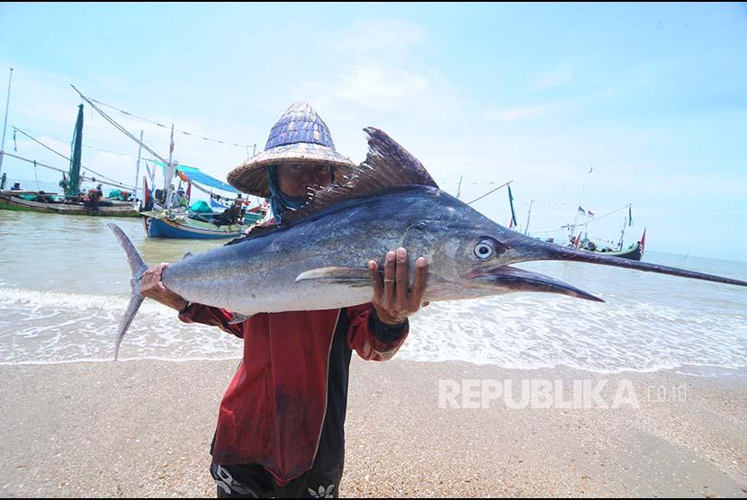 Nelayan menunjukkan ikan layar tangkapannya di Pantai Jumiang, Pamekasan, Jawa Timur, Rabu (7/11). Data Kementrian Kelautan dan Perikanan menyebutkan nilai ekspor perikanan Indonesia pada tahun 2017 mencapai  US$4,524 miliar.