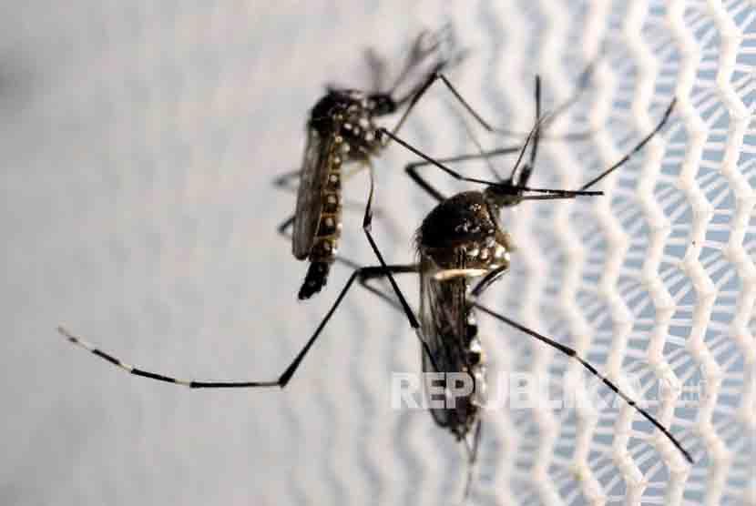 Waspadai DBD, Malaria, dan Leptospirosis Selama Mu