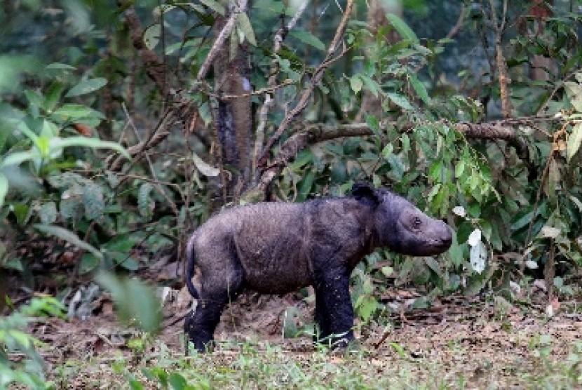 Objek wisata di Taman Nasional Way Kambas.