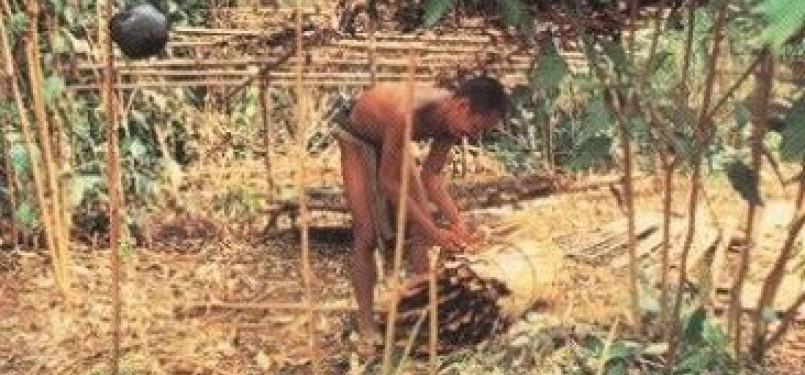 Orang Rimba Jambi