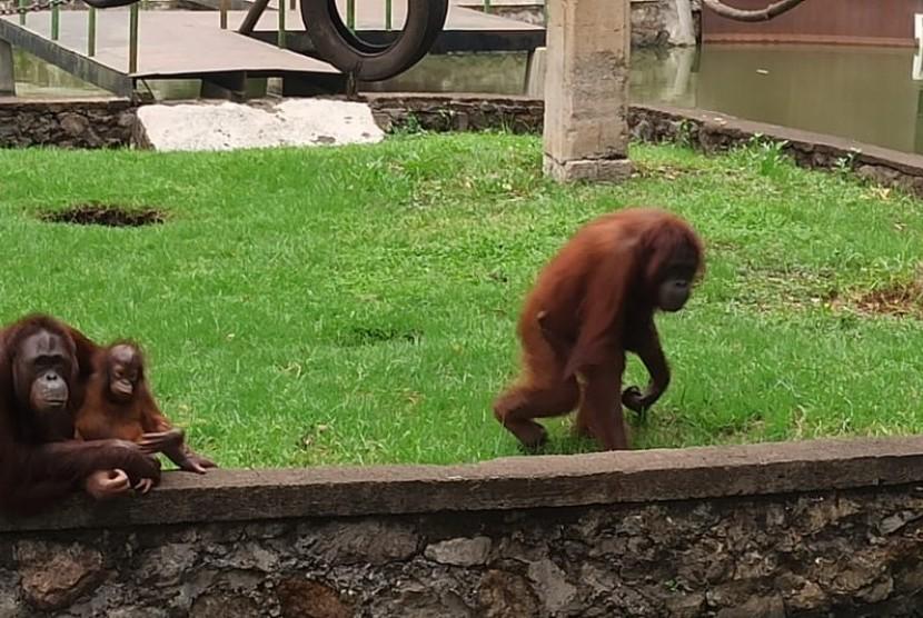 Taman Satwa Cikembulan Jaga Prokes Agar Aman Dikunjungi. (ilustrasi).