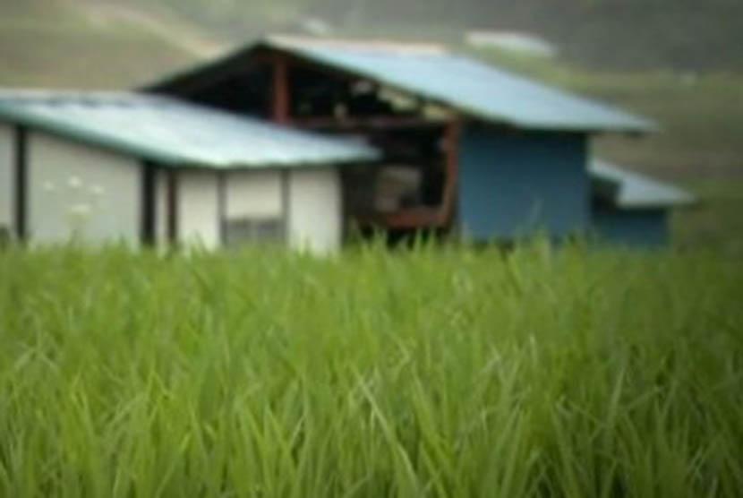 Padi di pertanian Jepang (Ilustrasi)
