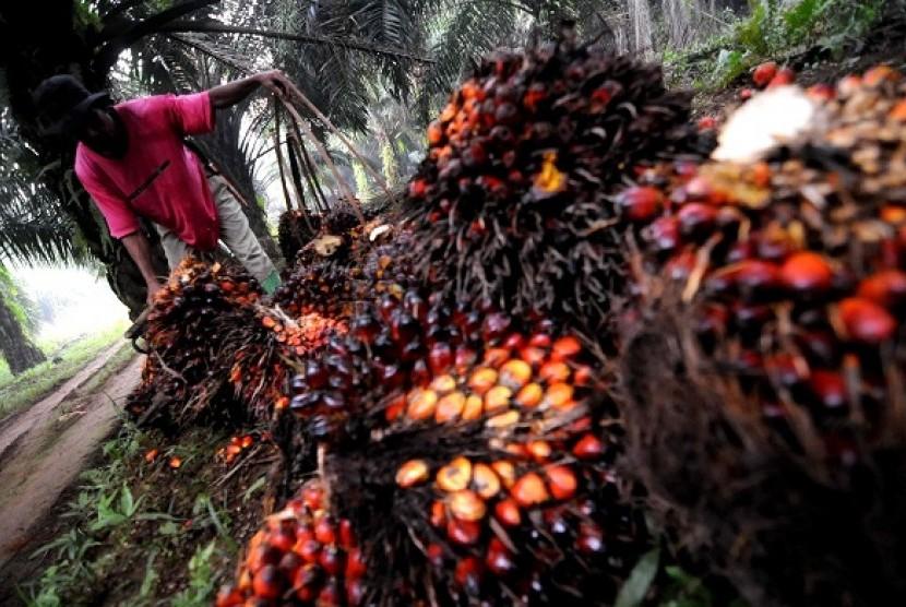 Palm fruit harvest in a plantation (illustration)