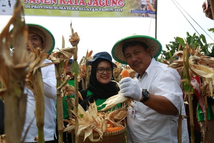 Panen jagung di Ogan Komering Ulu Selatan, Sumatra Selatan.