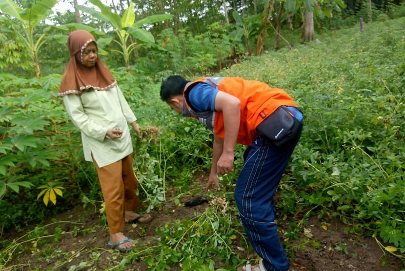 Panen perdana kebun gizi di Desa Berdaya Talang Balai Baru.