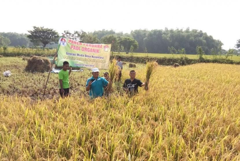 Panen perdana padi organik di Desa Kaligerman, Kecamatan Karanggeneng, Kabupaten Lamongan Jawa Timur.