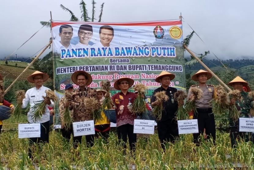 Panen raya bawang putih di Temanggung, Jawa Tengah, Kamis (28/3).