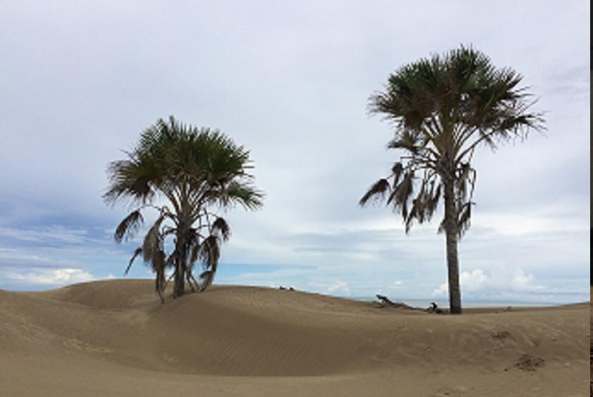 Pantai Oetune.