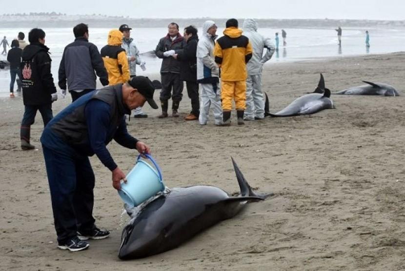 Paus melon terdampar di Pantai Jepang