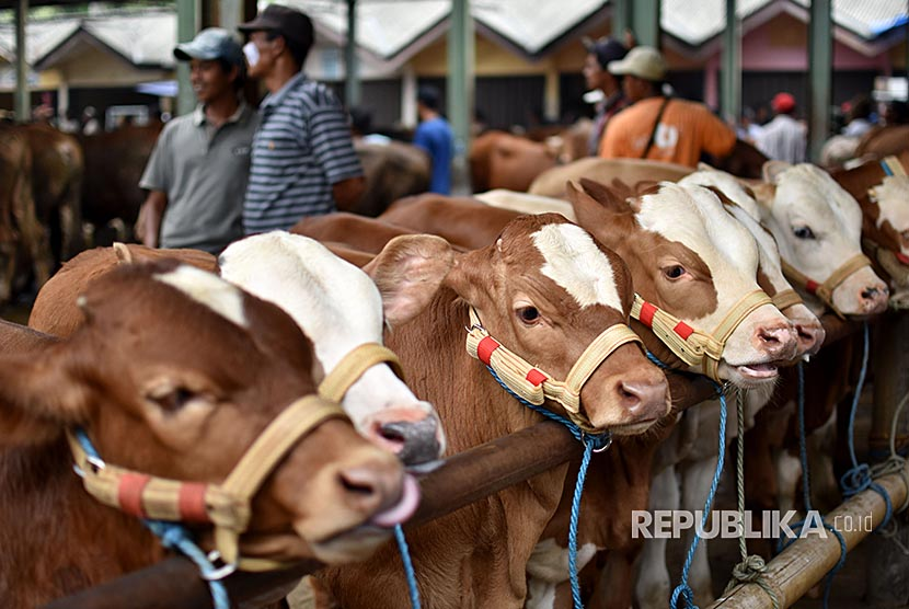 Pedagang dan pembeli bertransaksi sapi di Pasar Hewan Ambarawa, Kabupaten Semarang, Jawa Tengah, Kamis (9/11).