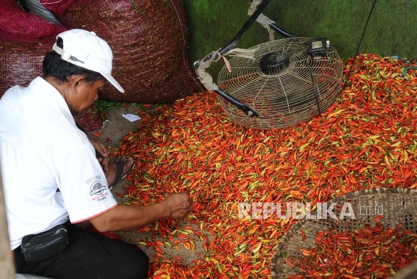 Pedagang sedang memilah cabai rawit merah di pasar tradisional. ilustrasi