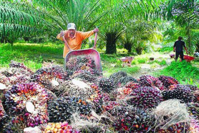 Pekerja di perkebunan sawit, ilustrasi