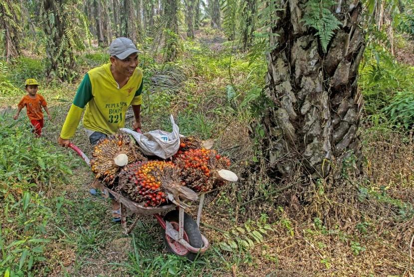 Pekerja melansir Tandan Buah Segar (TBS) Kelapa Sawit di Pekanbaru, Riau, Rabu (20/3/2019).