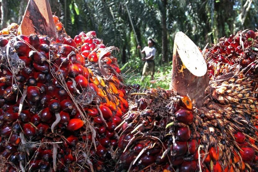 Pekerja memanen kelapa sawit di perkebunan inti rakyat Mesuji Raya, OKI, Sumatera Selatan, Rabu (7/9).
