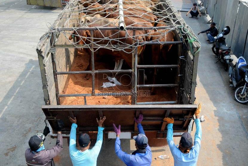 Pekerja memindahkan sapi impor Australia ke atas truk di Pelabuhan Tanjung Priok, Jakarta, Jumat (25/10).     (Republika/ Wihdan)