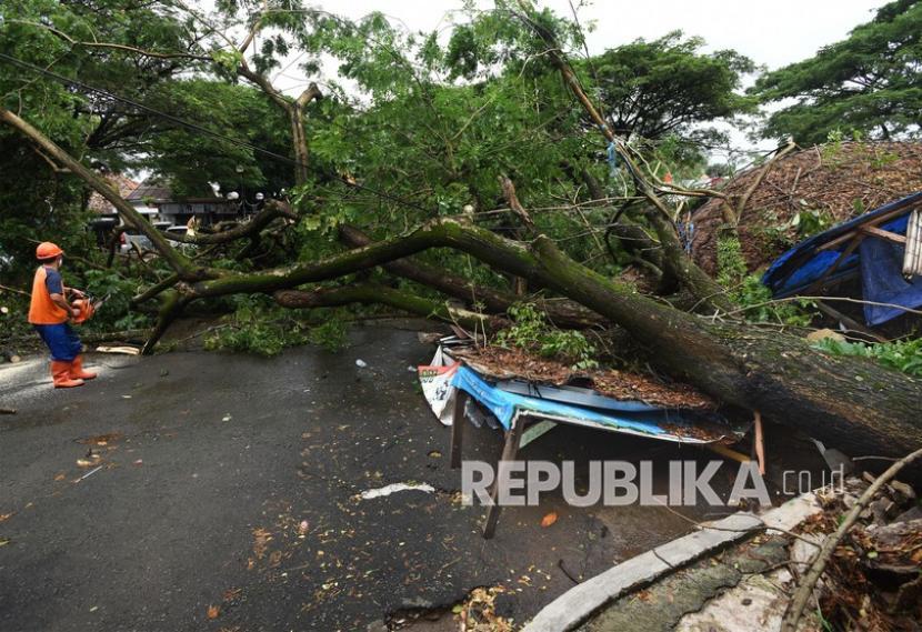 Pekerja memotong ranting pohon yang tumbang akibat hujan lebat disertai angin kencang.