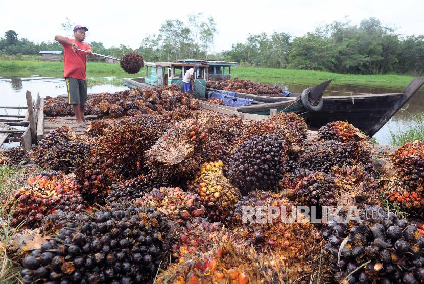Pekerja memuat tandan buah segar (TBS) kelapa sawit di Pematang Raman, Kumpeh, Muarojambi, Jambi, Jumat (15/2).