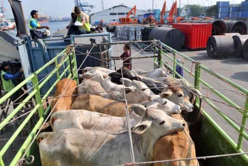 Pekerja menaikkan sapi bakalan yang diimpor dari Australia ke atas truk di kawasan Pelabuhan PT. Pelindo II, Tanjung Priok.  (ilustrasi)