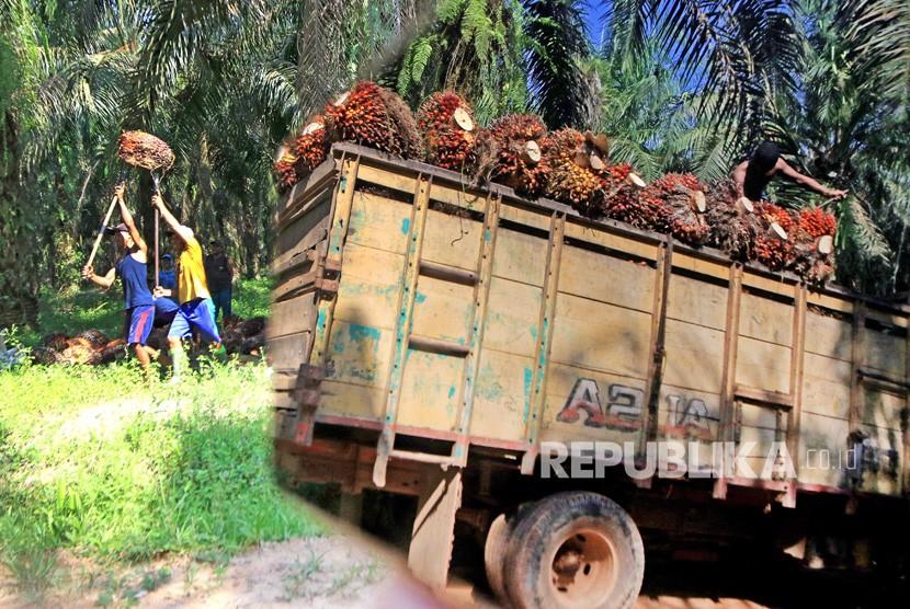 Pekerja mengangkut kelapa sawit kedalam truk di Perkebunan sawit di Mesuji raya, Ogan Komering Ilir, Sumatera Selatan, Ahad (9/6/2019).