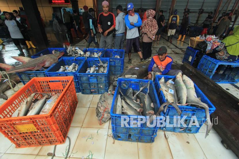 Pekerja mengumpulkan ikan hasil tangkapan nelayan di tempat pelelangan ikan Karangsong, Indramayu, Jawa Barat, Ahad (31/1/2021). Kementerian Kelautan dan Perikanan (KKP) mencatat Penerimaan Negara Bukan Pajak (PNBP) perikanan tangkap pada tahun 2020 mencapai Rp600,4 miliar, meningkat dari tahun 2019 yang hanya mencapai sebesar Rp521,37 miliar.