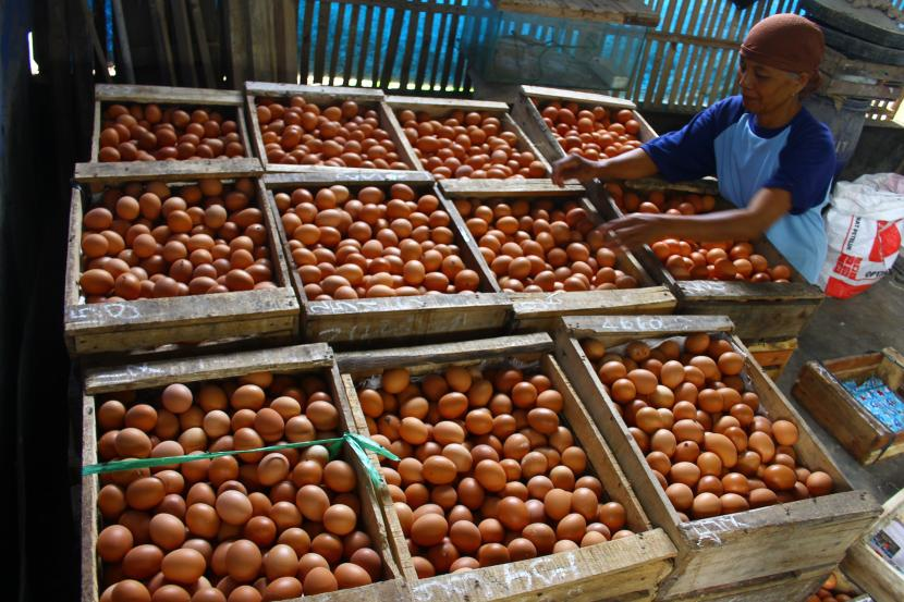 Pekerja menimbang telur ayam (ilustrasi). Pemprov Lampung memantau harga bahan pangan yang mengalami kenaikan maupun penurunan.