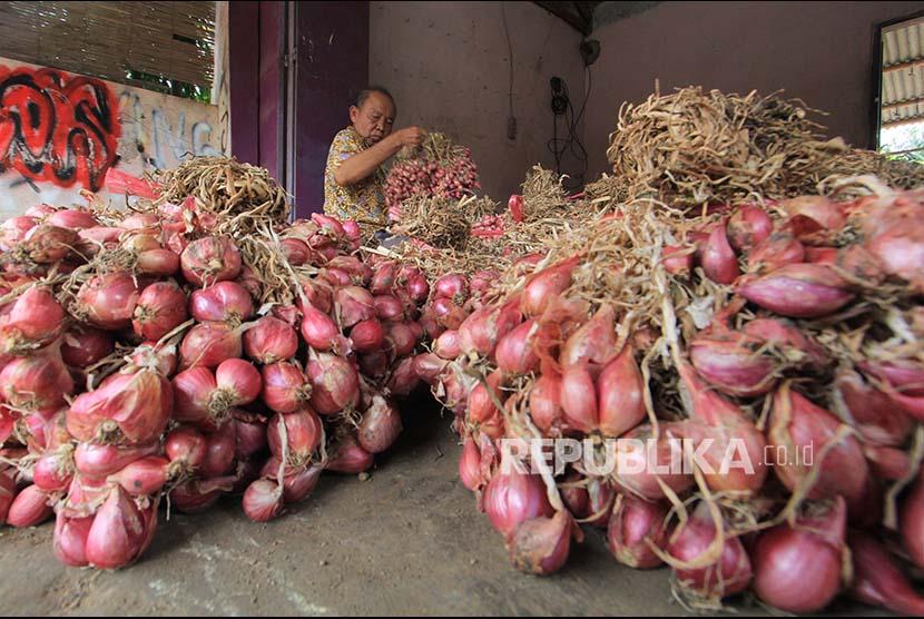 Pekerja menyortir bawang merah hasil panen. (ilustrasi)