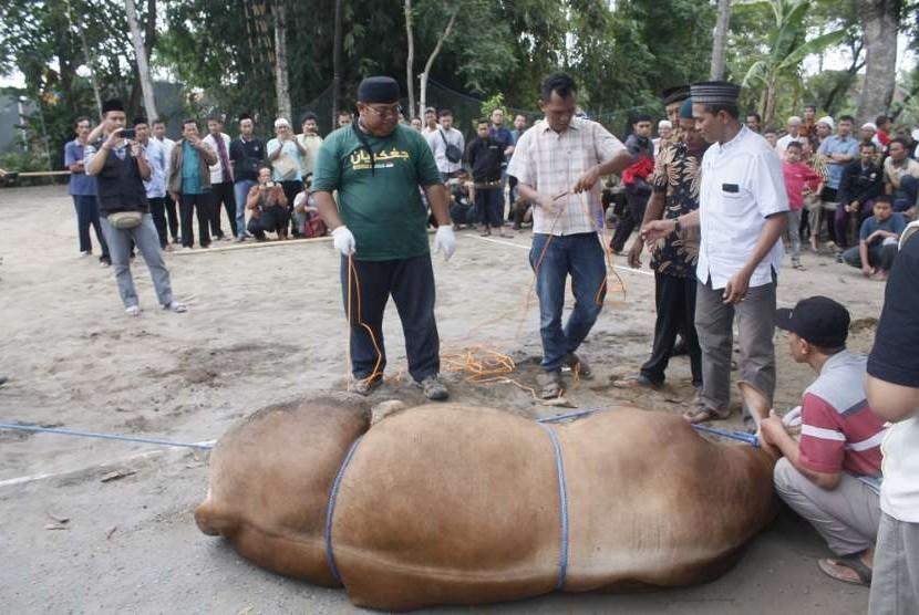 Pelatihan penyembelihan hewan kurban di Masjid Ar Rahmah Krapyak, Sidoarum, Godean, Sleman, DI Yogyakarta.