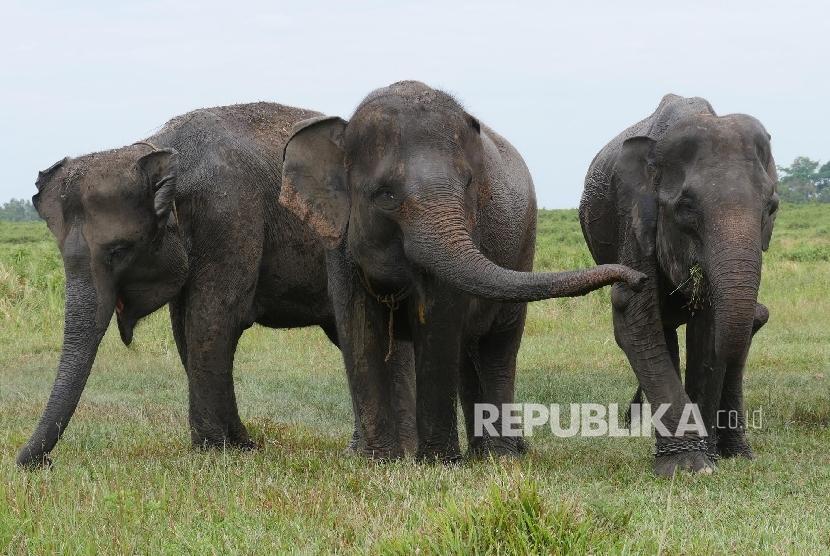 Gajah Liar Masuk Kampung di Lampung | Republika Online