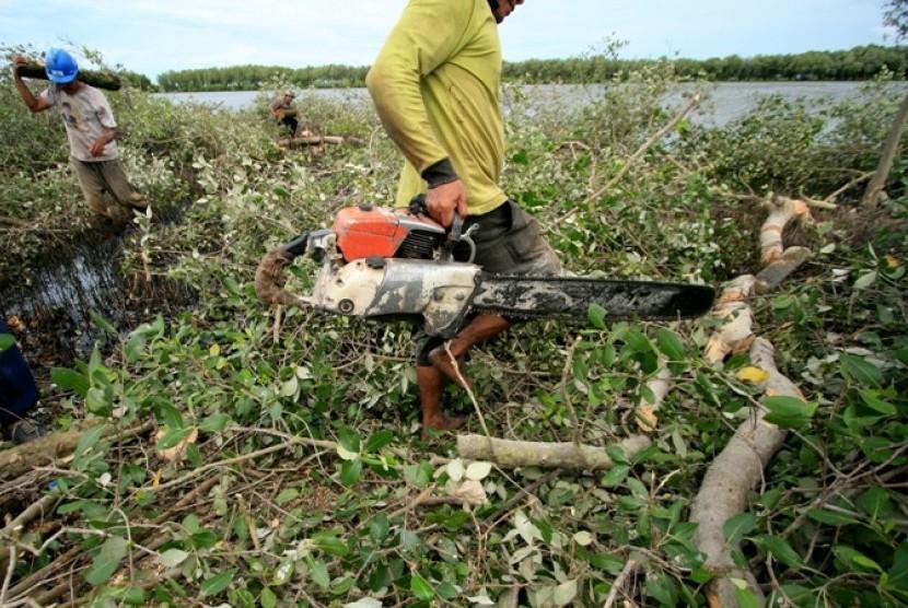 Penebangan Hutan Bakau. Indonesia miliki hutan bakau terluas sekaligus terusak di Asia Tenggara