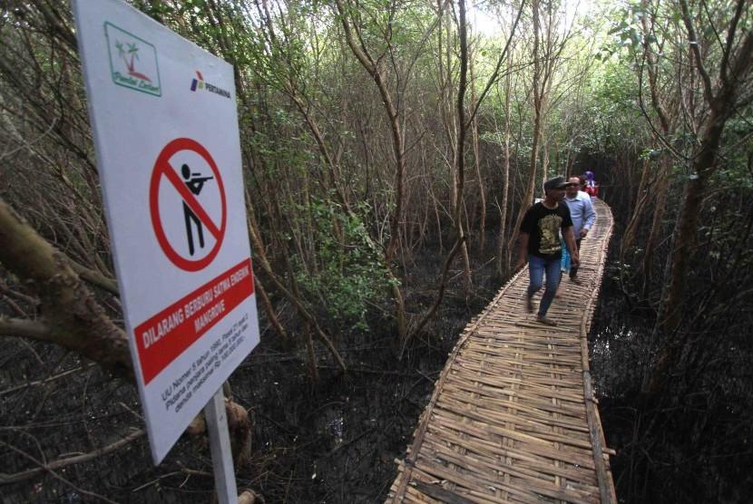Pengunjung menikmati suasana hutan mangrove di ekowisata mangrove (ilustrasi)